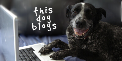 Ruby the Bloggin Doggin
