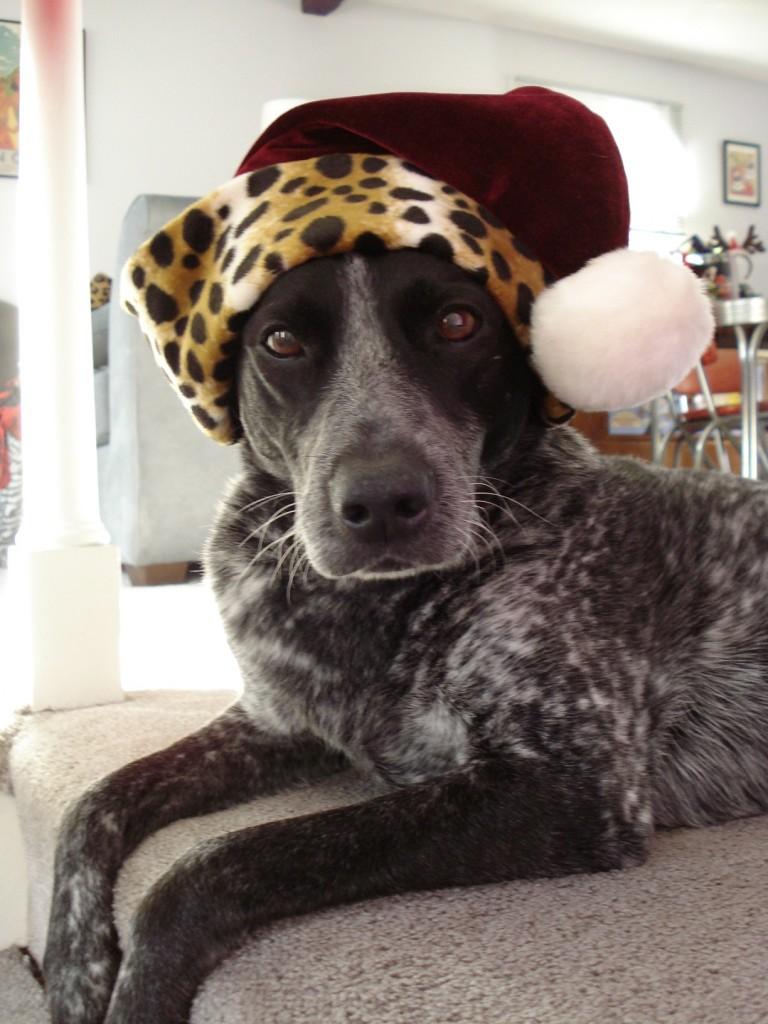 Santa has a doggy elf!