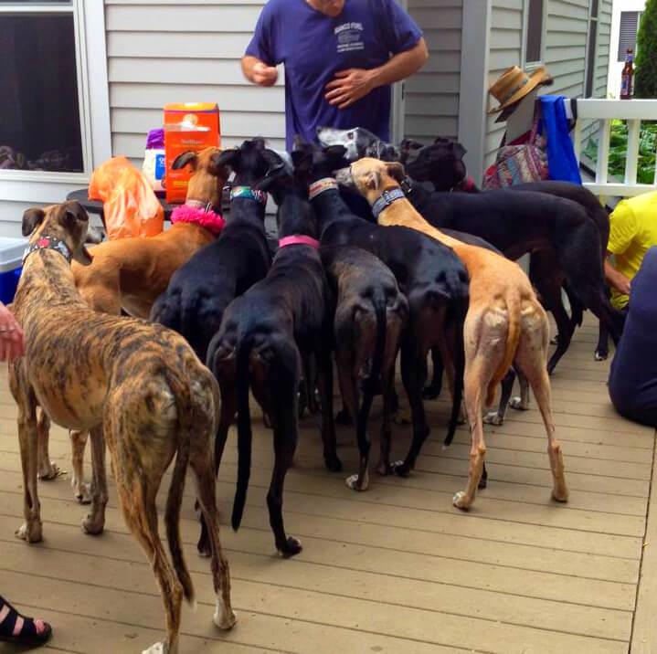 19 Greyhounds Walk into a Cookout…