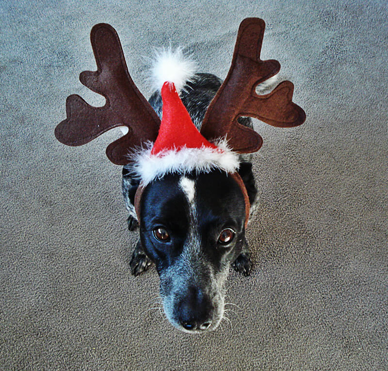 Merry Christmas from the Bloggin' Dog