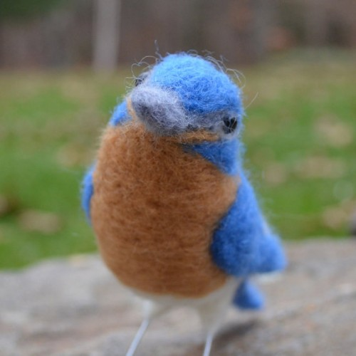 TCM Designs-Mr Bluebird