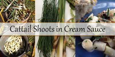 'tis the Season: Cattail Shoots in Cream Sauce