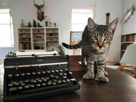 A cat named Harry Truman