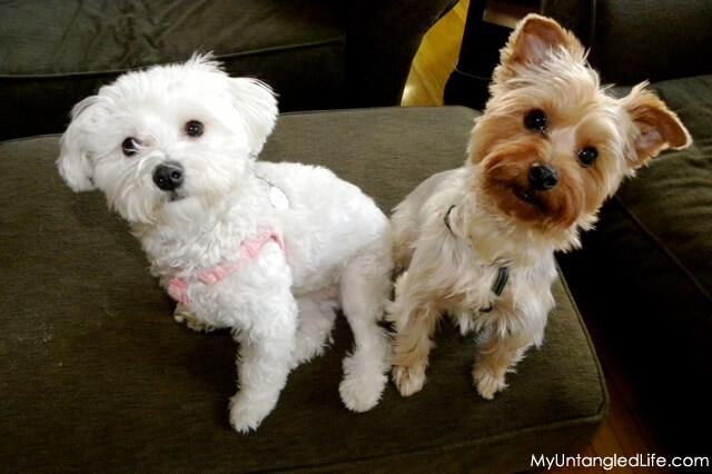Beckett and Luna Team ASPCA