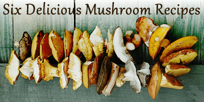 6 Delicious Mushroom Recipes - MyUntangled Life