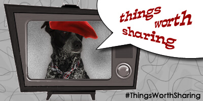 Things Worth Sharing – Pet Videos!