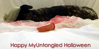 Happy Halloween Haiku - myuntangledlife.com