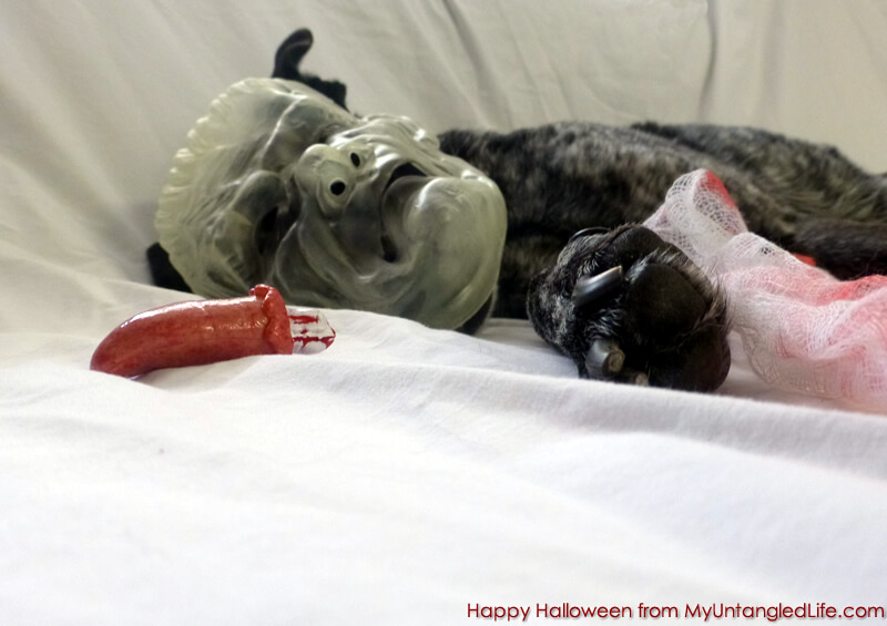 Ruby's Doggy Halloween Haiku