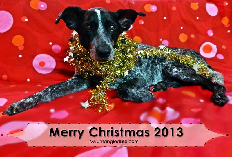 Merry Christmas 2013 from MyUntangledLife.com