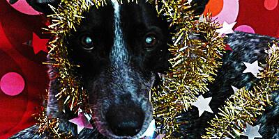 Ruby's 2013 Christmas Haiku