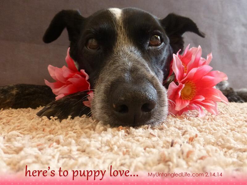 MyUntangled Valentine 2.14.14 #bemyvalentine