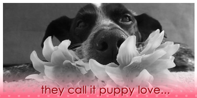 Ruby's Valentine's Day Haiku 2.14.14