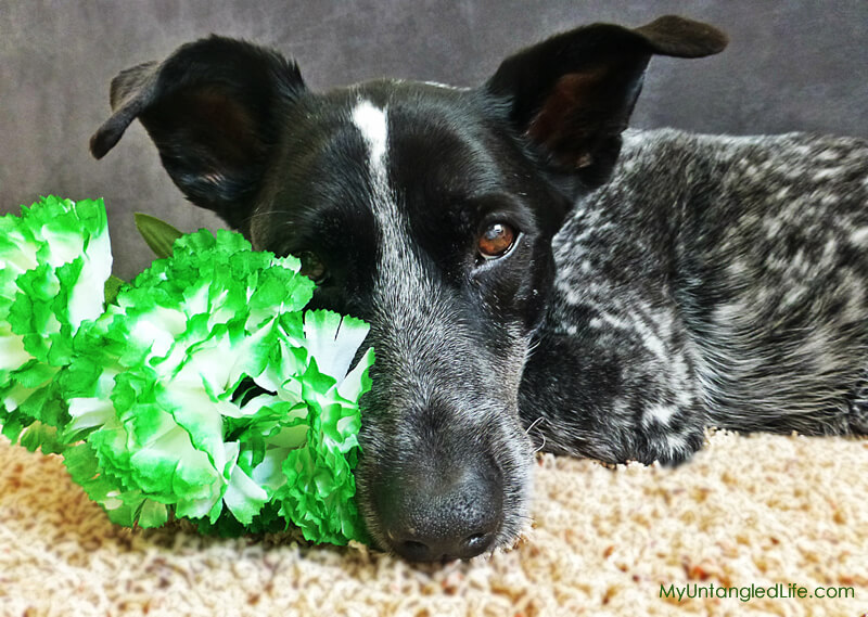 Green with Doggy Envy