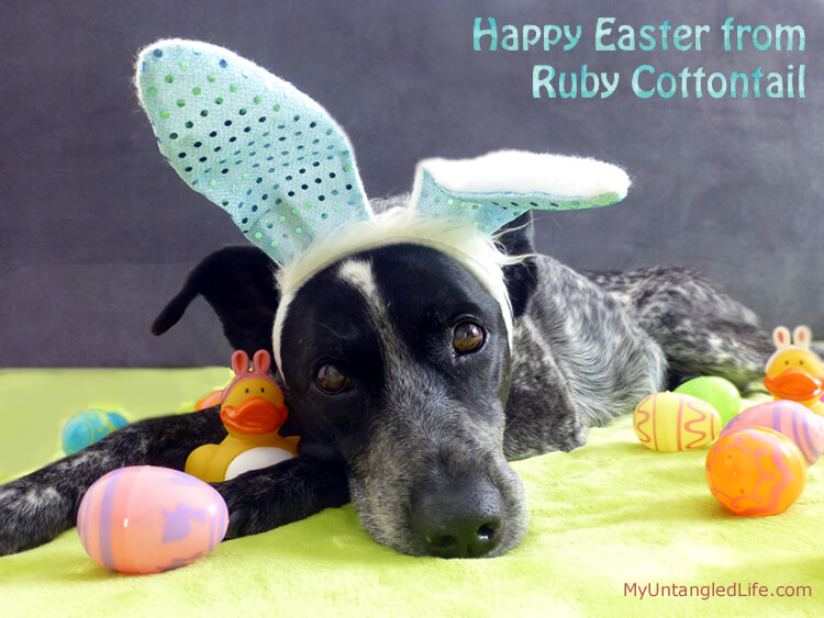 Ruby's Happy Easter Haiku #dogs
