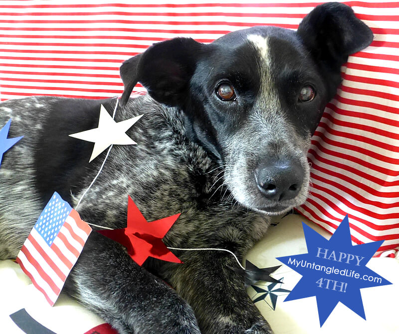 Happy 4th of July from Ruby the Bloggin' Dog