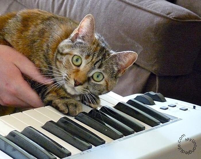 Emma as Keyboard Cat