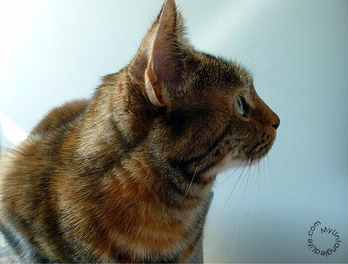 Pretty Emma Cat