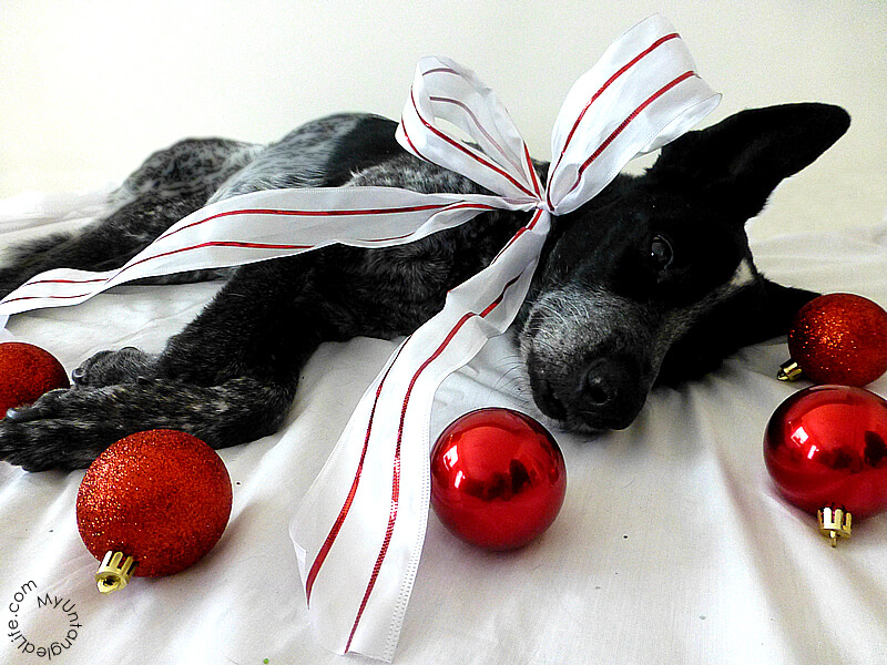 Bloggin' Dog Christmas Haiku 2014