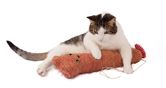 Go Cat Toys - Top Gift for Pets!l