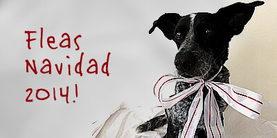 Merry Christmas and Fleas Navidad from Ruby the Bloggin' Dog!