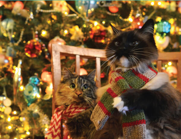 Itty Bitty Kitty Committee Christmas Card