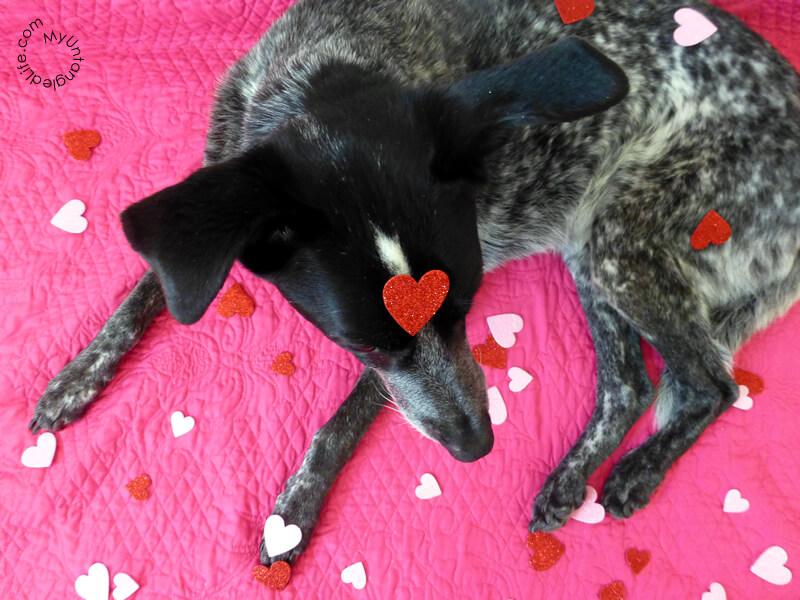 A Bloggin #Dog Valentine 2015