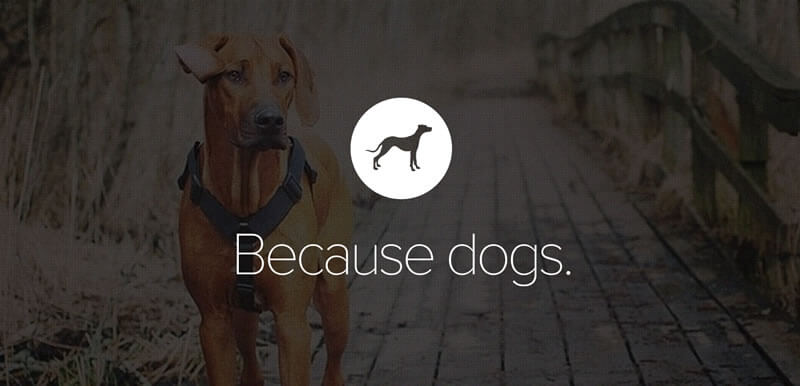 Pack - Website for Dog Lovers