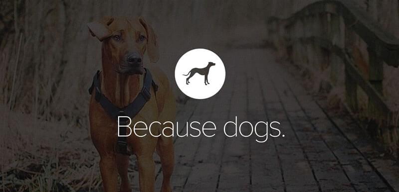 Pack - Website for Dog Lovers