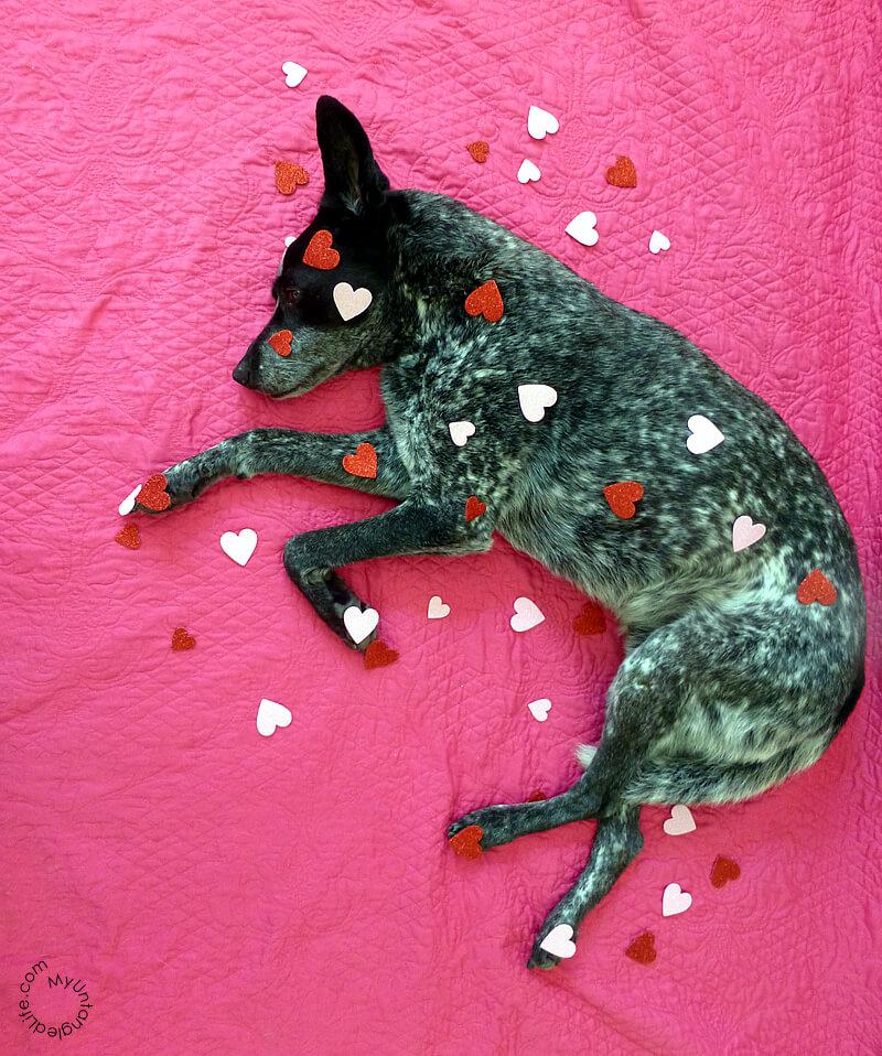 Ruby's Valentine Haiku 2015