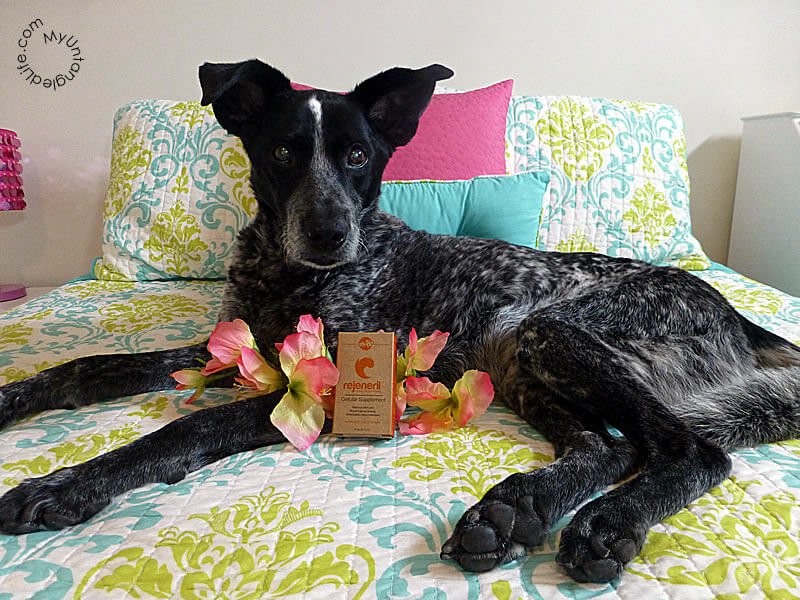 Ruby is a Silver Fox with Rejeneril Dietary Supplements