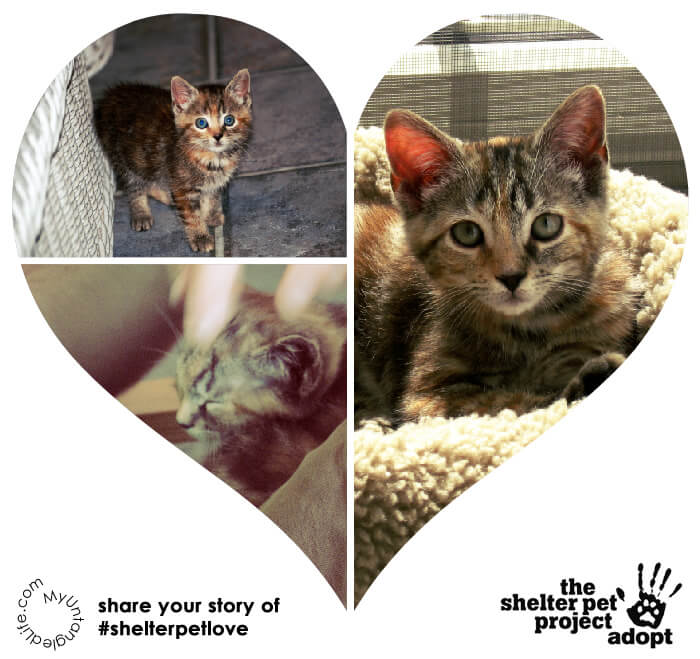 Support the Shelter Pet Project with Emma Cat and MyUntangled Life #ShelterPetLove