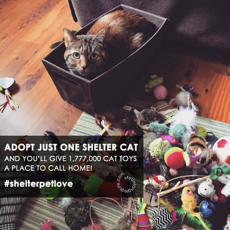 ADOPT JUST ONE SHELTER CAT AND YOU'LL GIVE 1,777,000 CAT TOYS A PLACE TO CALL HOME! #shelterpetlove #thingsworthsharing