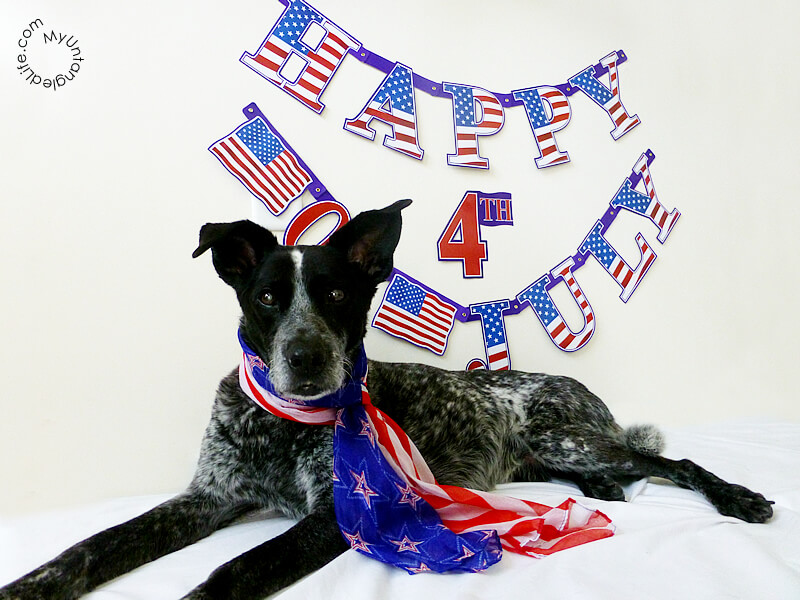 Happy 4th of July 2015 from Ruby the Bloggin' Dog and MyUntangled Life!