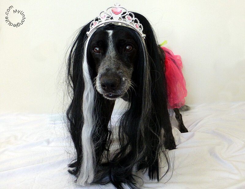 Happy Howl-ween from Ruby the Ballerina Dog and MyUntangled Life!