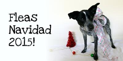 Ruby's 2015 Christmas Haiku