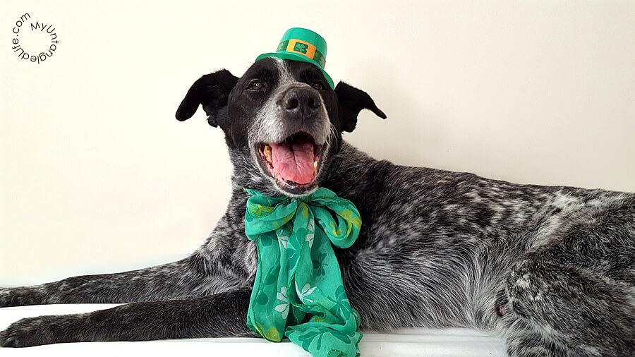 Happy St. Patricks Day 2016 from Ruby the Bloggin' Dog and MyUntangled Life