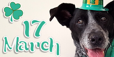 Ruby's 2016 St. Paddy's Day Haiku