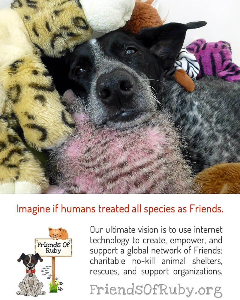 Imagine if humans treated all species as Friends. Our ultimate vision is to use technology to create, empower, and support a global network of Friends: charitable no-kill #animal shelters, rescues, and support organizations. #FriendsOfRuby