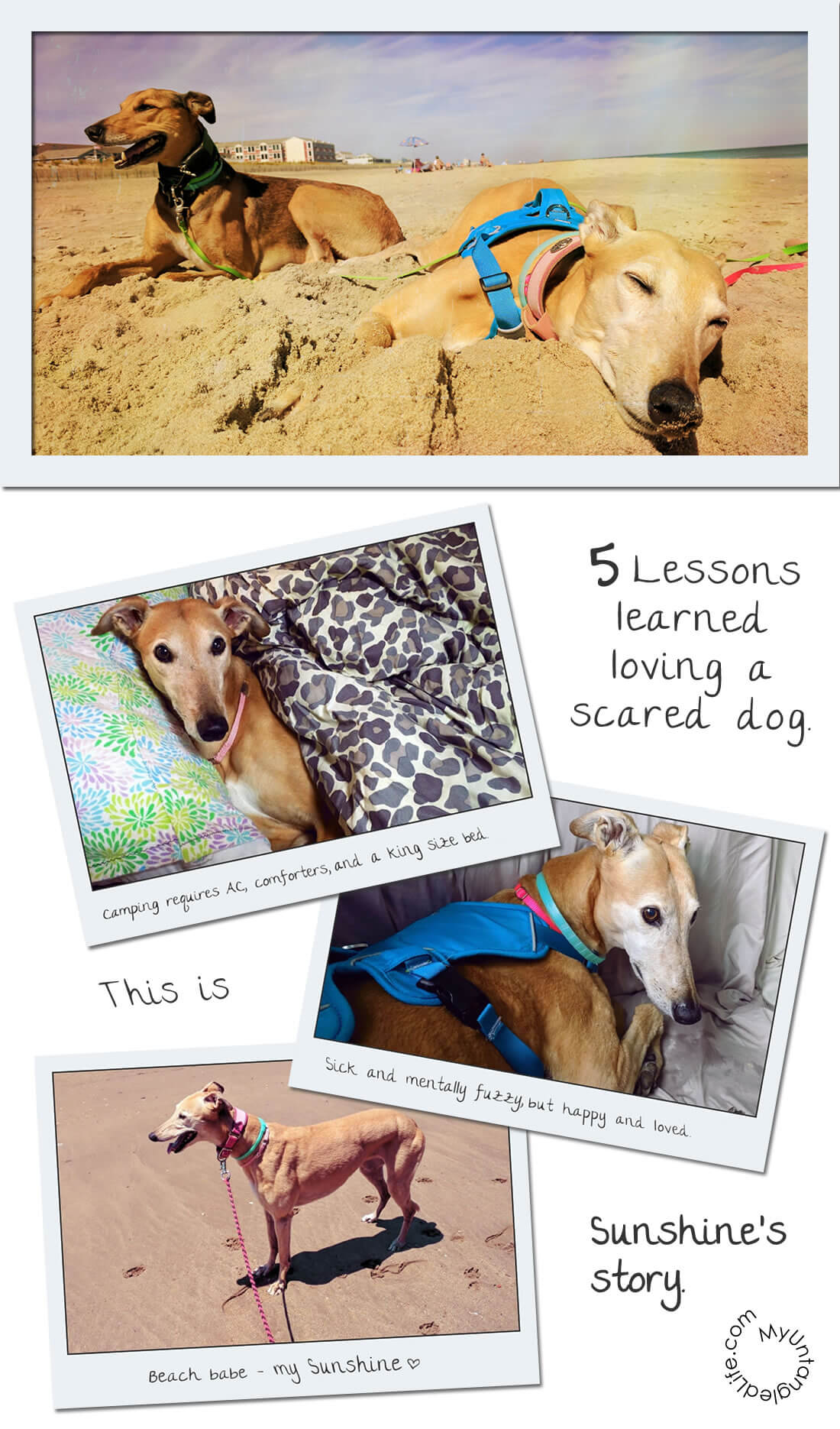 5 Hard Mommy Lessons Learned from a Scared Greyhound - How to Care for a Fearful #Dog